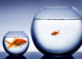 Image of small fish in a big pond